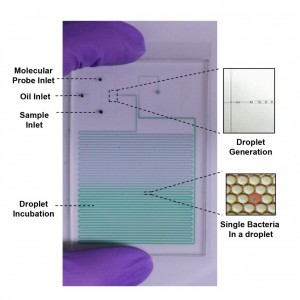 Droplet Chip Photo Wang-Lab- JHU